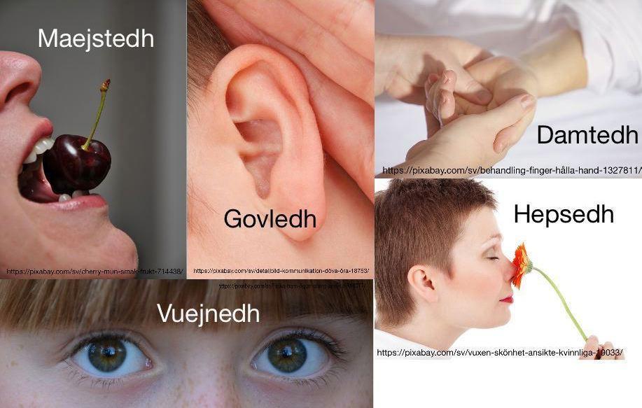 Daajh:
